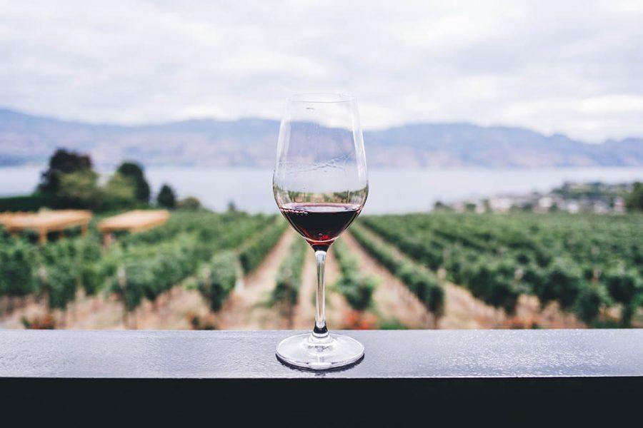 Unos cuantos motivos por los que beber vino